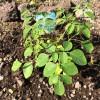 【マルンガイ一週間】めんどくさがりやのボクが植物を育て始めて気づいたこと
