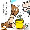 【4コマ】奇跡の木「マルンガイ」栽培中…熱帯性だけど日本でも結構育つよ!