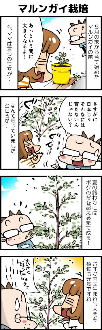 04マルンガイ栽培