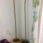 枯れ木じゃないよ。これが『奇跡の木』マルンガイだよ!